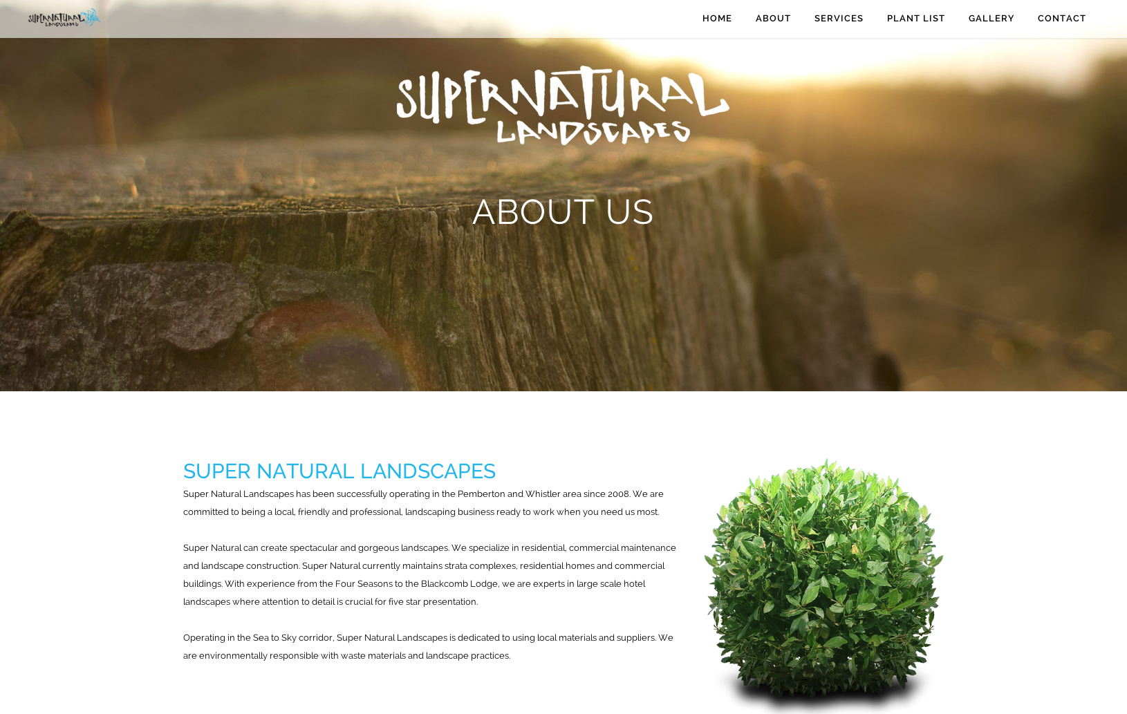 Sea Salt Web Design Whistler landscape website 2